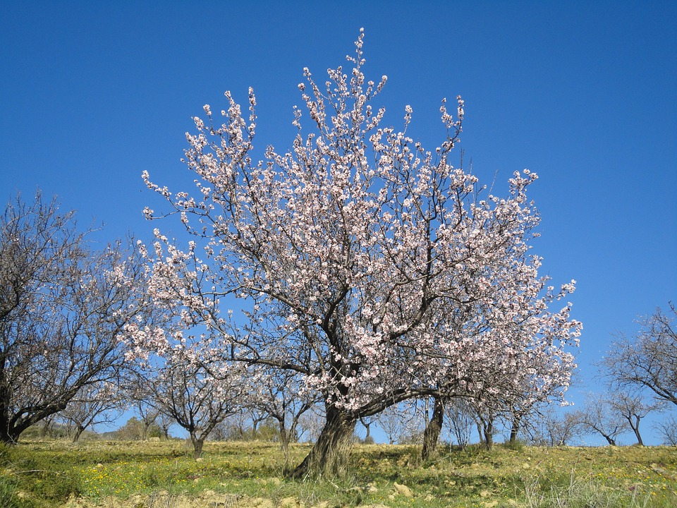 Malaga in February & Spring