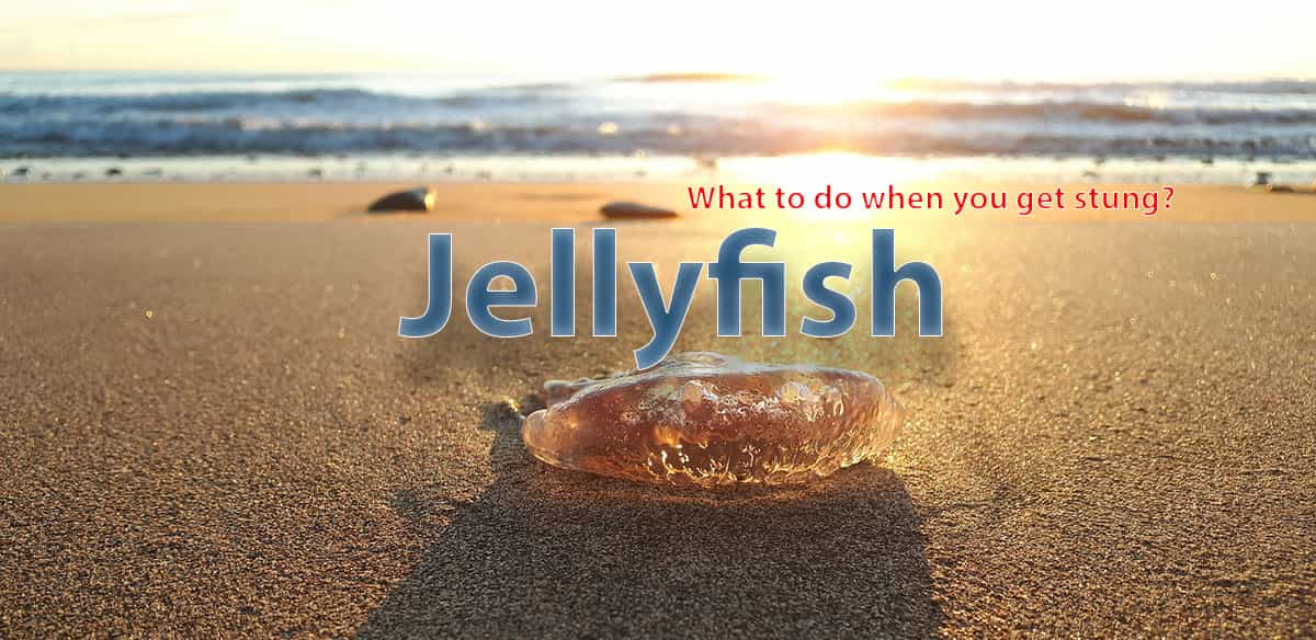 Jellyfish sting guide