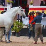 Horse Fair in Jerez