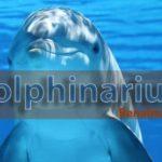 Dolphins in Benalmadena