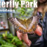 Butterfly Park in Benalmádena