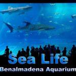 Sea Life Benalmadena Aquarium