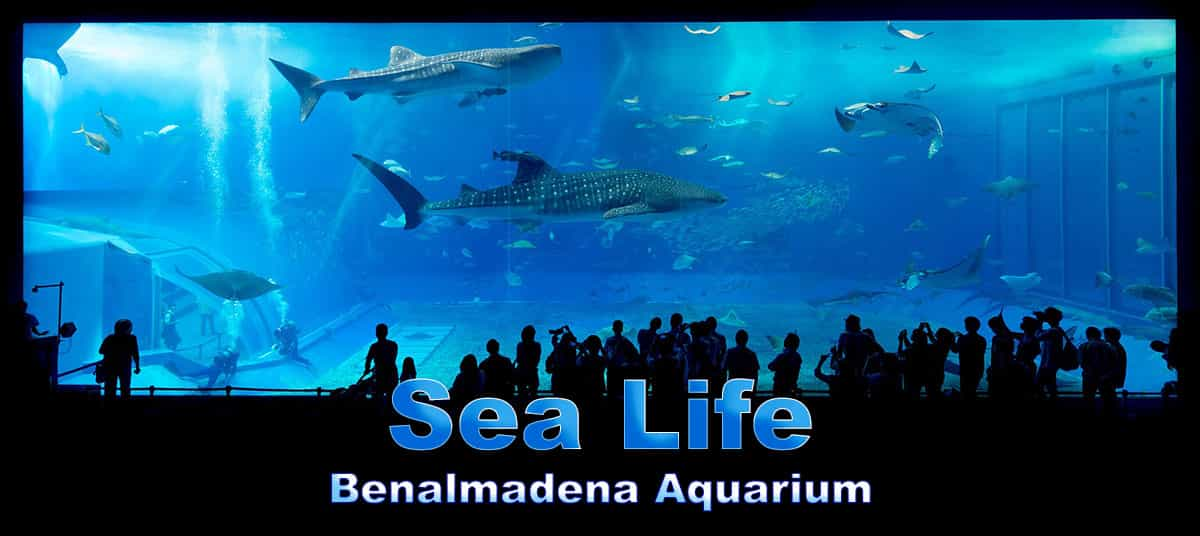 Sea Life Benalmadena Aquarium