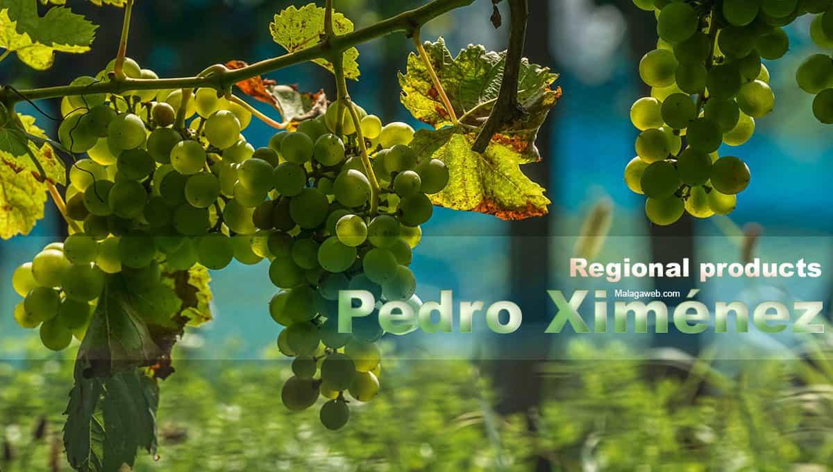 Malaga wine Pedro Ximenez