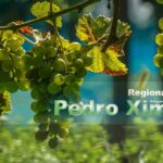 Pedro Ximenez Wein