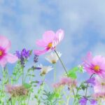 Fakten über das Frühlingsäquinoktium
