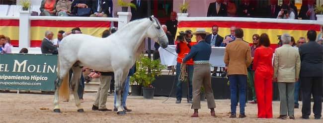 Pferdemesse genannt in Jerez