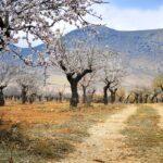 Februar - Monat der Mandelblüte