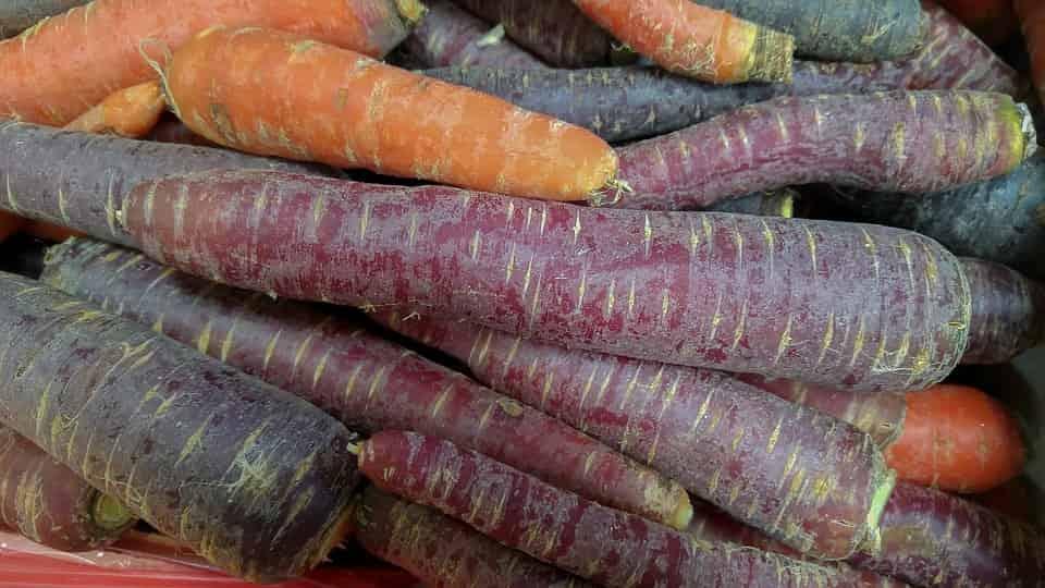 Zanahoria Morá