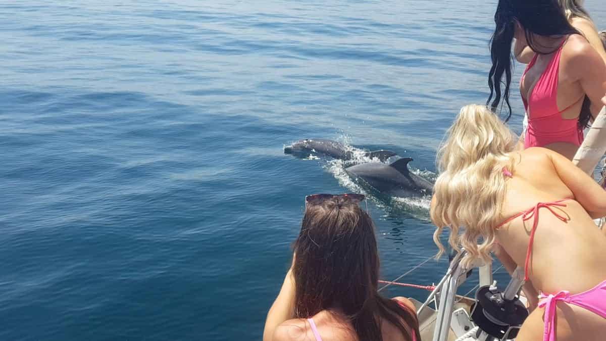 Avistamiento de delfines en catamarán