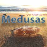 Guía esencial para picaduras de medusas