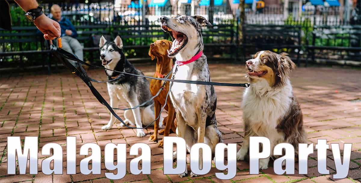 Malaga Dog Party