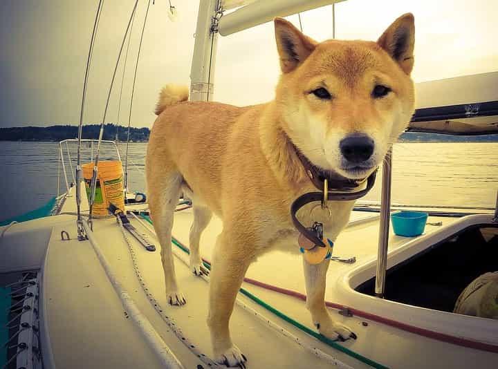 perro en un barco