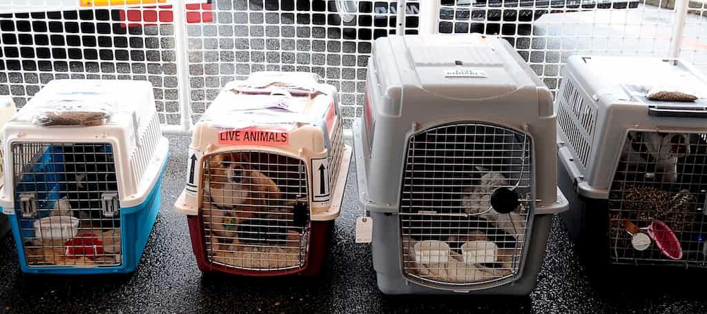 pet carrier or kennels for flights