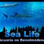 Sea Life Acuario en Benalmádena