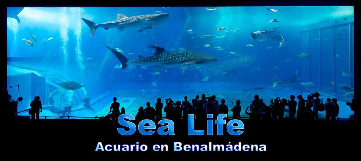 Sea Life Aquarium in Benalmadena