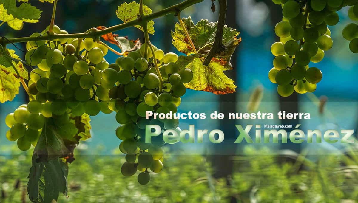 Uvas Pedro Ximénez