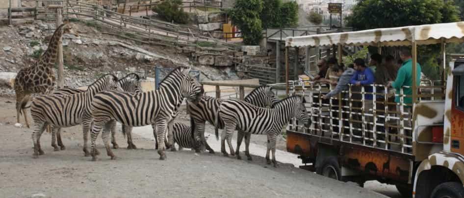 Safari en Estepona