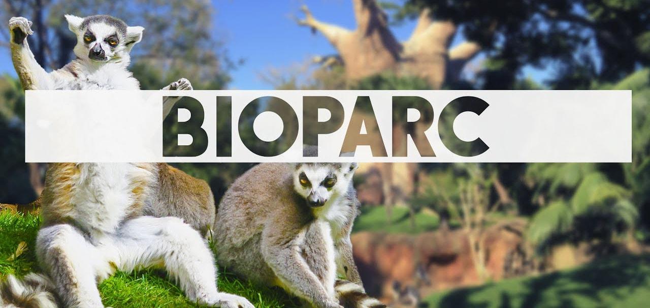 Imágen de Lémures en Bioparc Fuengirola