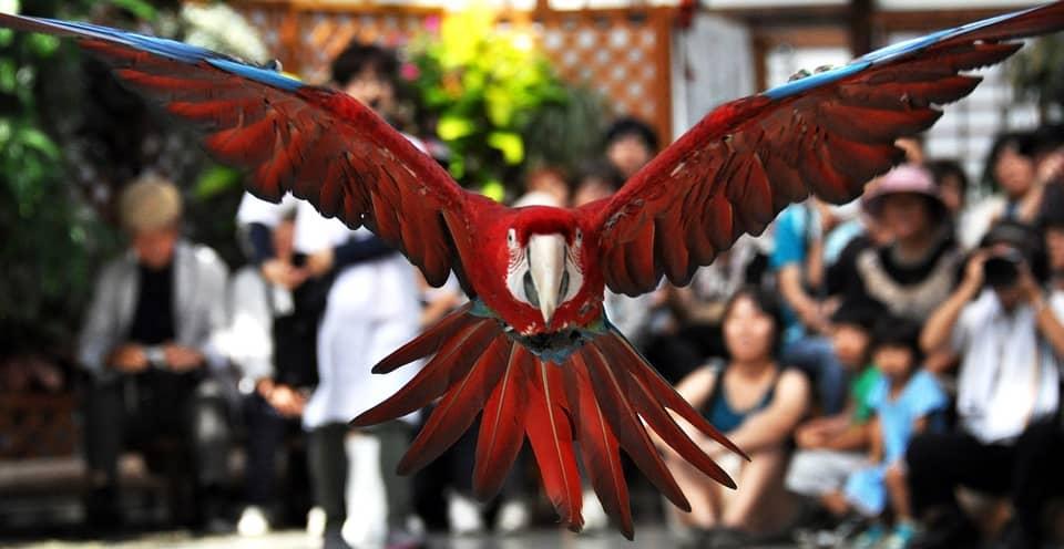 Macaw show