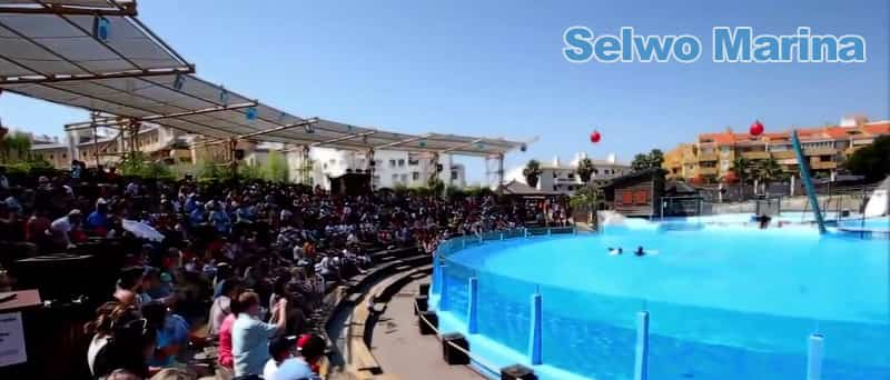 Dolphins show in Benalmadena
