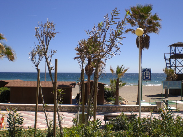 Estepona promenade and palms 6