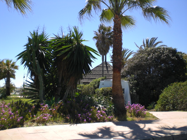 San Pedro picture with palms 2