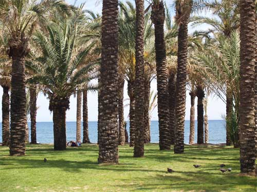 Torremolinos beach  palms 3