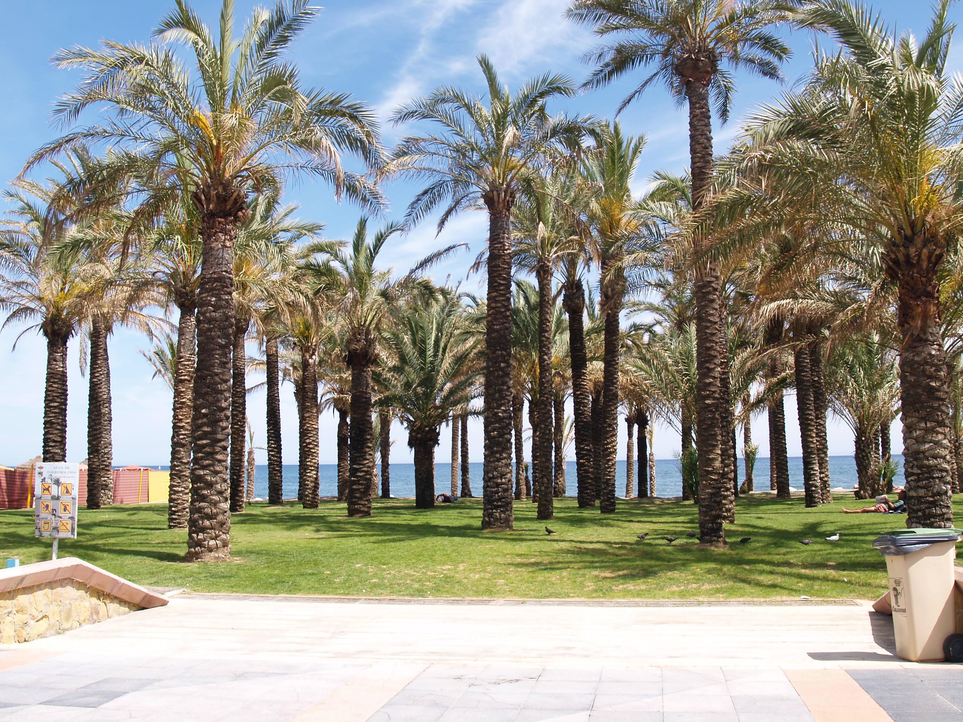 Palms in Torremolinos
