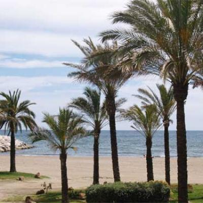 Beach and palms picture