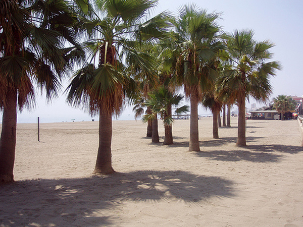 Estepona beach and palms 2