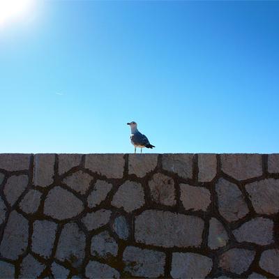 Estepona's Bird