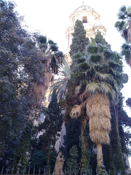 Malaga palms 9