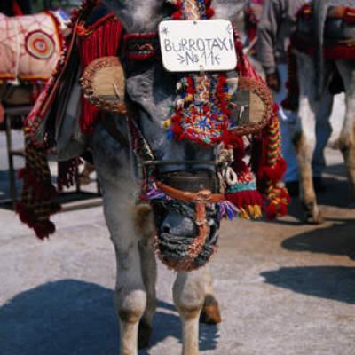 Mijas donkey 13