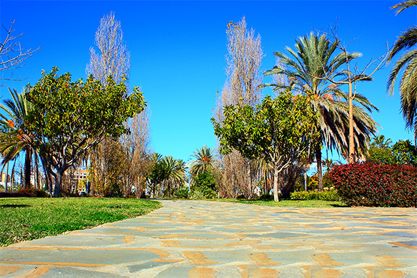 Park in San Pedro 17