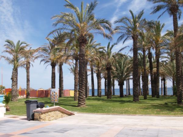 Palms in La Carihuela