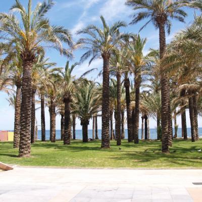 Torremolinos beach palms 2