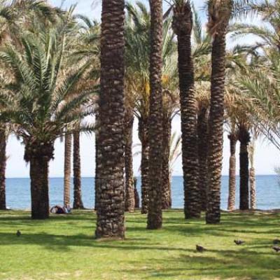 Torremolinos beach  palms 3