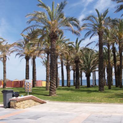 Palms in La Carihuela