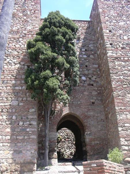 Alcazaba 6